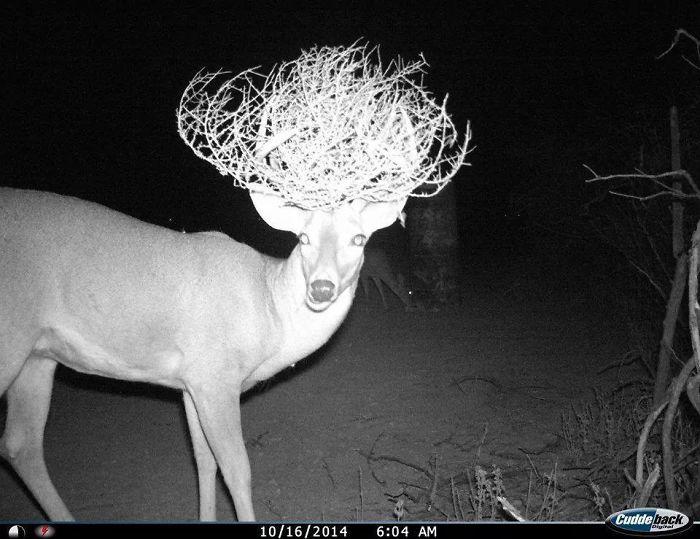 vadon élő állatok rejtett kamera előtt