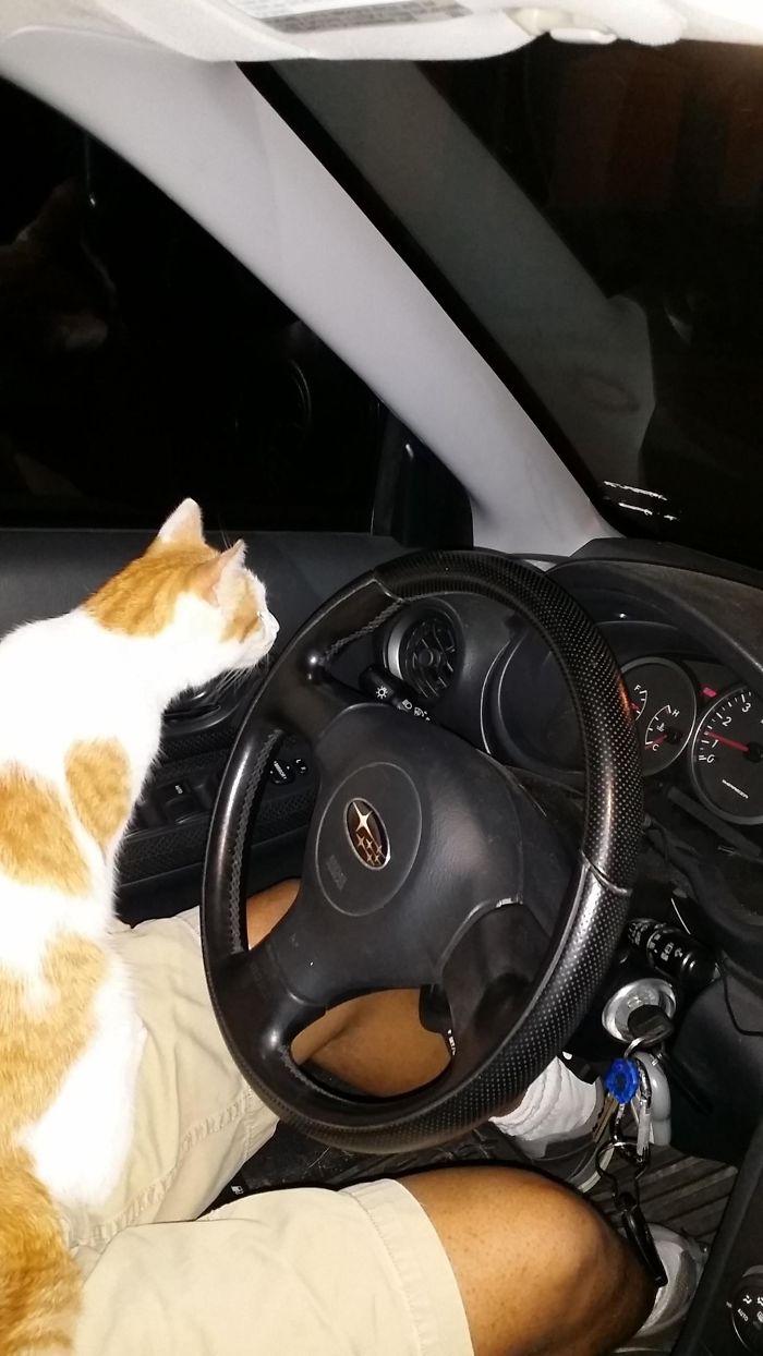vicces macskás fotók