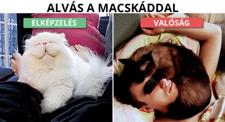 Élet egy macskával