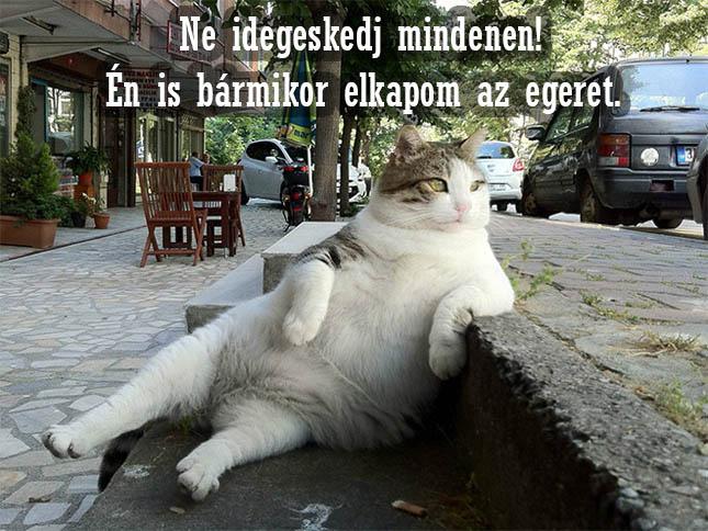 Élet macskaszemmel