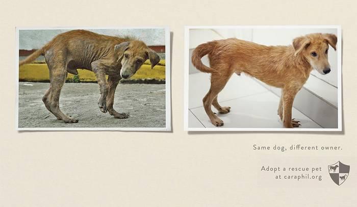 15 ütős reklámkampány az állatokért