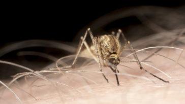 El szeretnéd kerülni a szúnyogcsípést