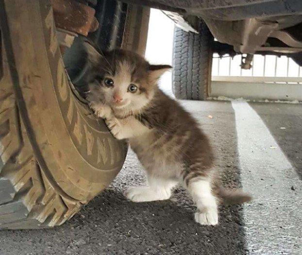 Talált egy ijedt kiscicát az autó alatt