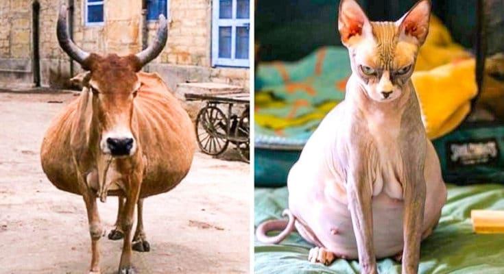 az állatok világában is látványos változásokkal jár a vemhesség