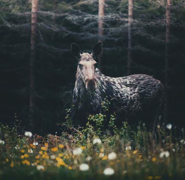 az erdő lakói