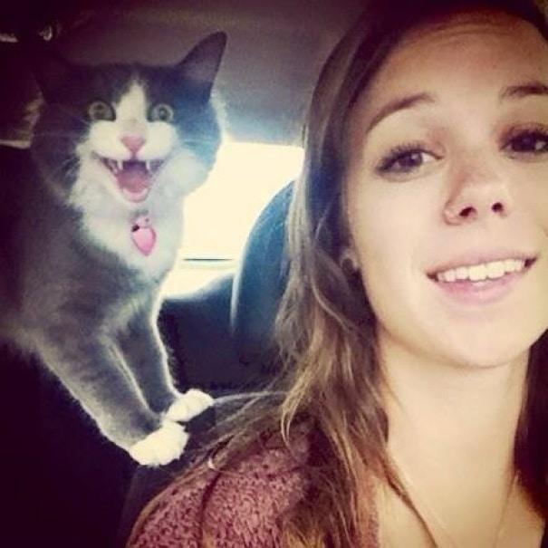 nem túl fotogén macskák