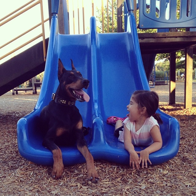 A kislány és a dobermann, akik mindent együtt csinálnak
