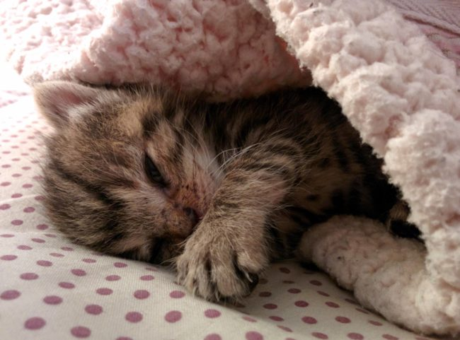 Az utcán találták ezt a sérült kiscicát