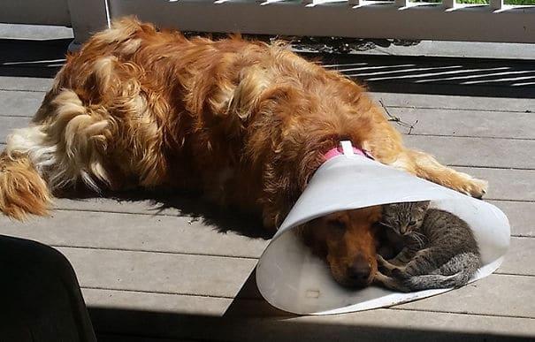 a kutyák és a macskák szeretik egymást
