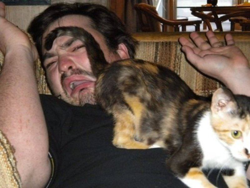 a macskák igazából bundába bújt gazfickók