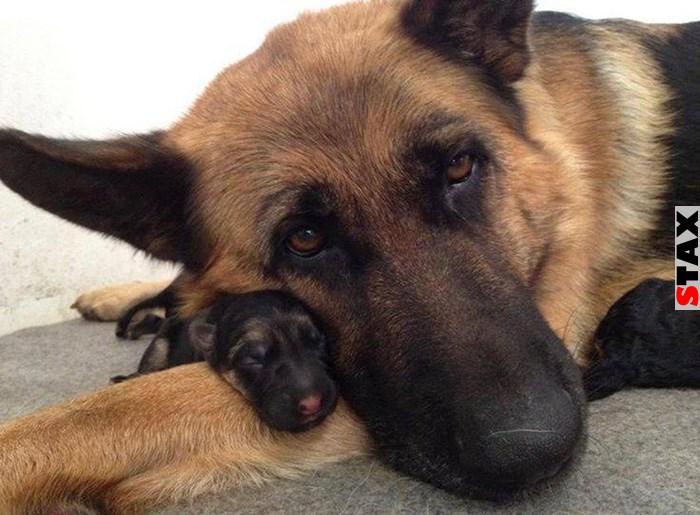 kutyák a zabálnivaló kis apróságaival