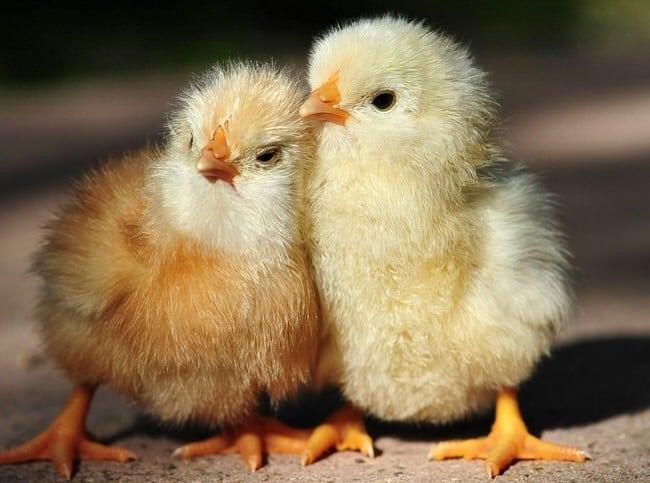 11 különös tény az állatvilágból