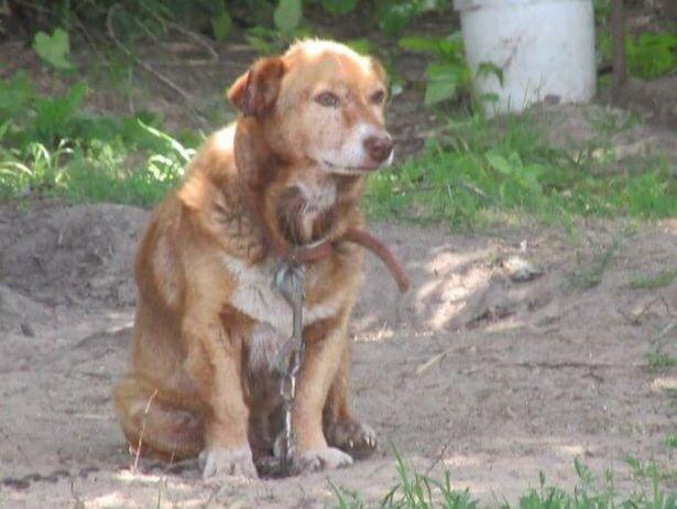 16 nap boldogságot kapott az idős kutya