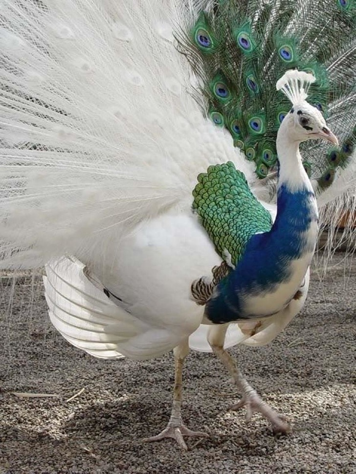 18 szokatlan színű állat