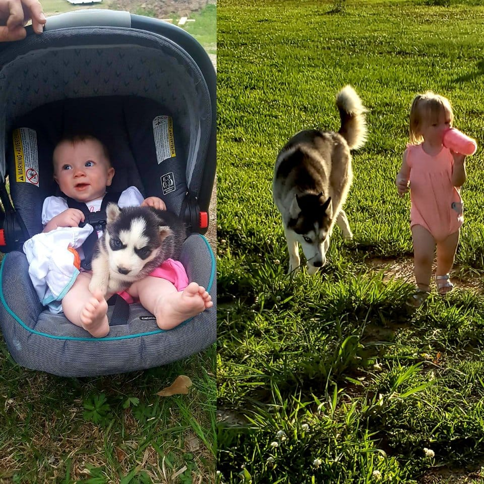 20 nagyra nőtt kutyus