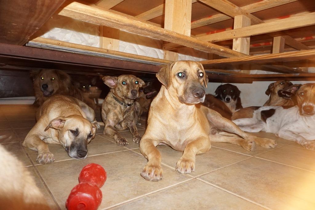 97 kutyát fogadott be egy bahamai nő a hurrikán idejére