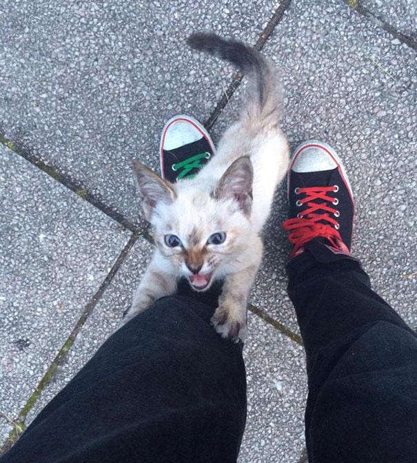 A férfi hazafelé tartott, mikor odament hozzá egy kóbor macska