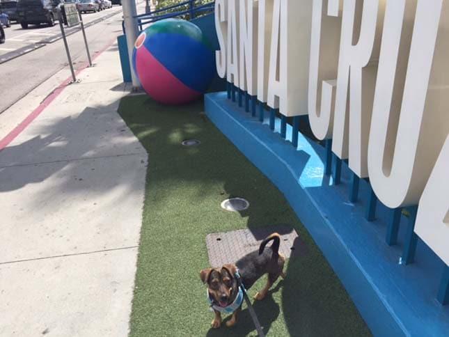 A frissen adoptált kutya ábrázatánál már nem lesz cukibb