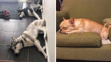 A gazdik megosztották kutyáik imádni való furcsaságait