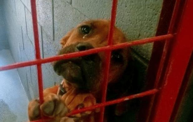 A menhelyes kutya könnyekkel a szemében menekült meg