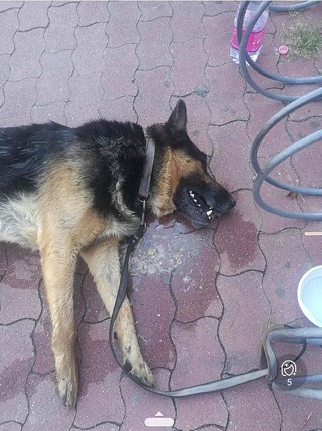 A tűző napon, a Tesco elé kikötve halt meg egy kutya Szentesen
