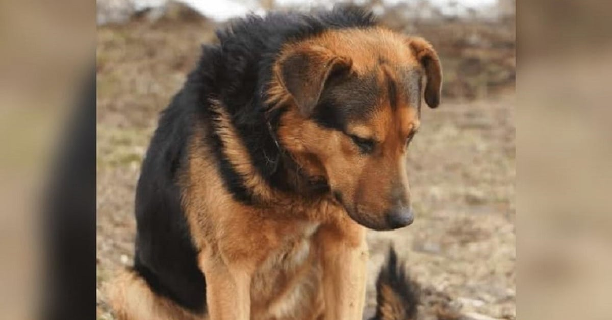 Az elhagyott kutya 7 napot várt az út szélén