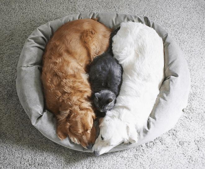 Két kutya is vigyáz a világ legmázlistább cicájára