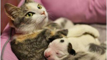 Kóbor macska vette magához az elárvult kiskutyát