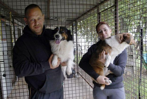 Kutyák, cicák százait mentették már meg