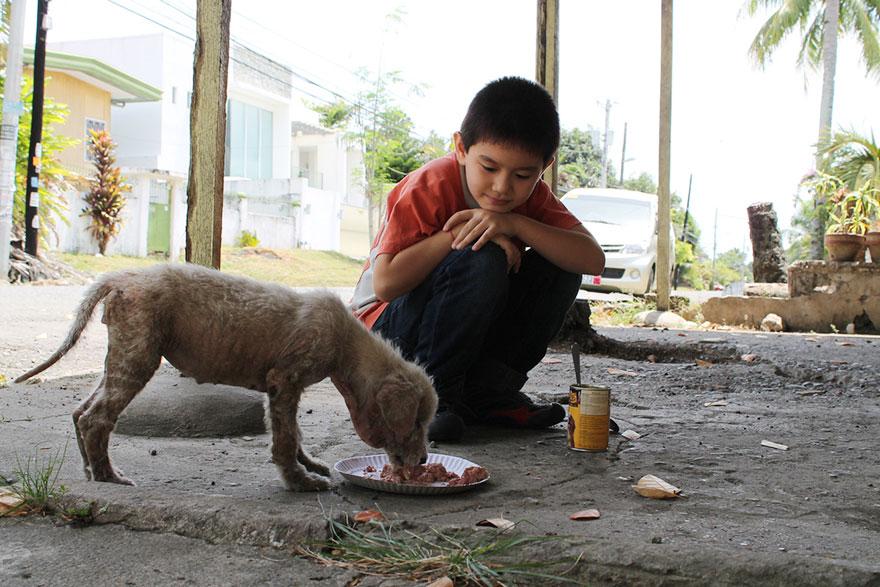 Kutya menhelyet nyitott a 9 éves kisfiú