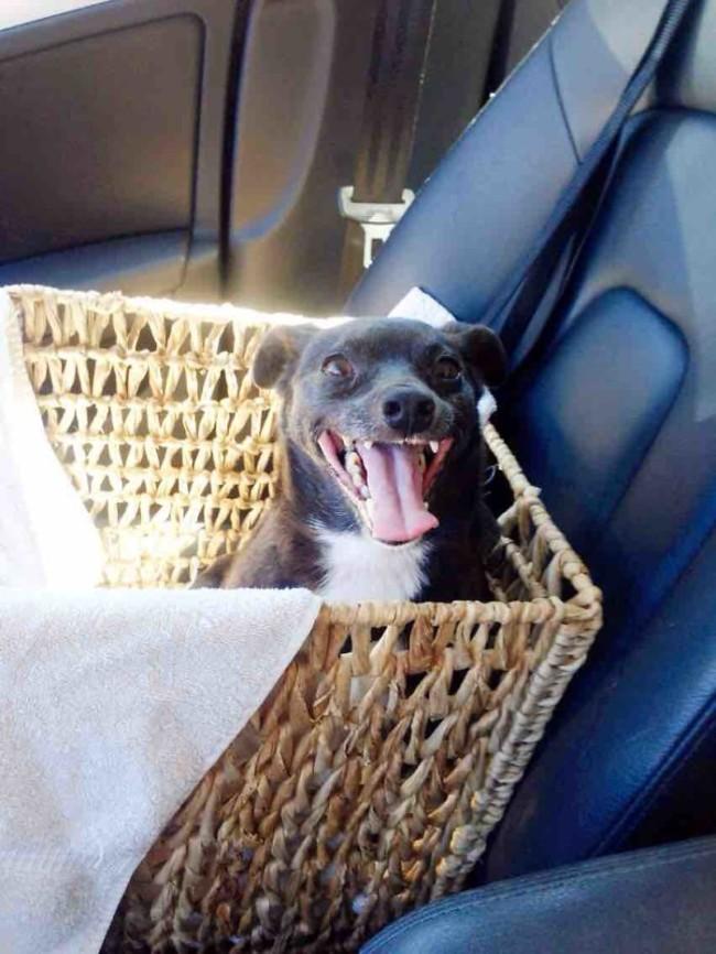 Mentett kutyusok első napja az új gazdikkal