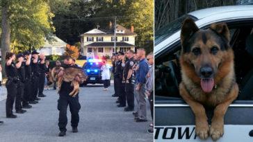 Rendőrsorfal mellett, sírva vitte altatásra kutyáját a gazdája