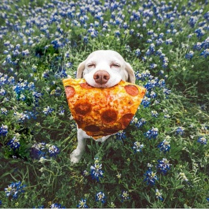 a kutyák szeretetből készültek