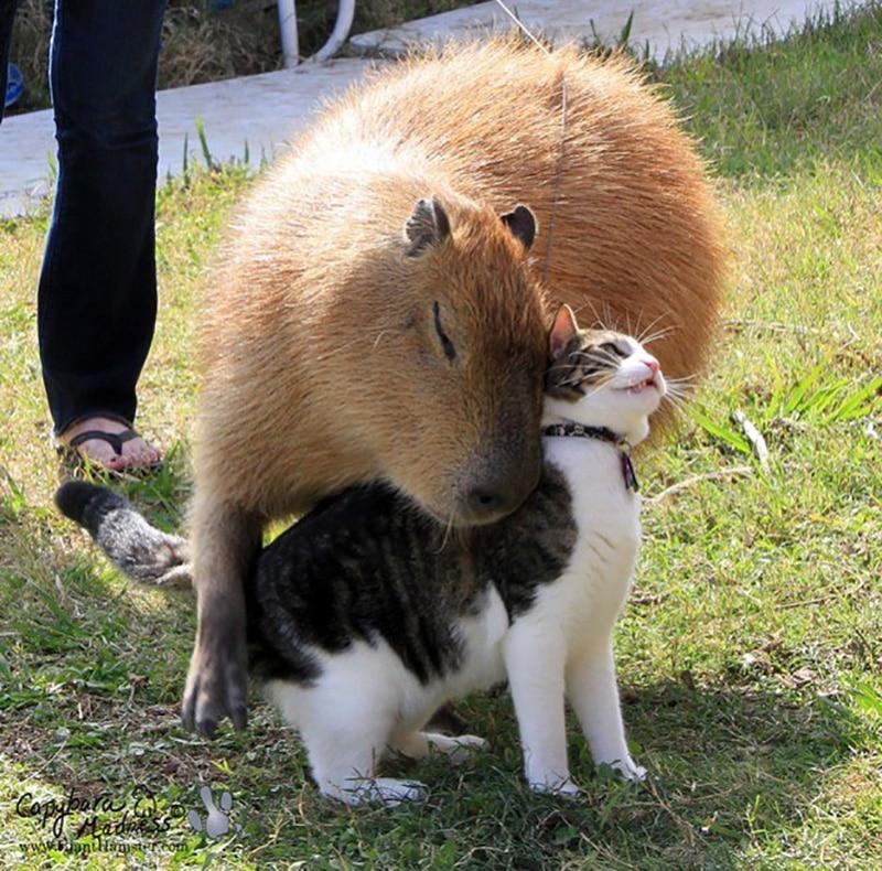 a vízidisznók a legjobb fej állatok a világon