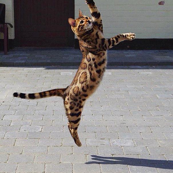 a világ legkülönlegesebb macskája
