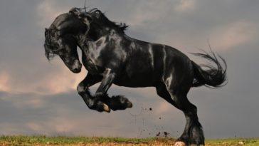 a világ legszebbnek tartott lovai