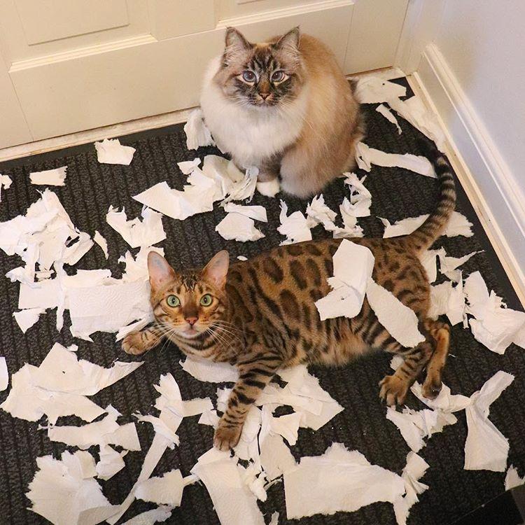 amit a háziállatok csinálnak, amikor egy pillanatra nem figyelünk