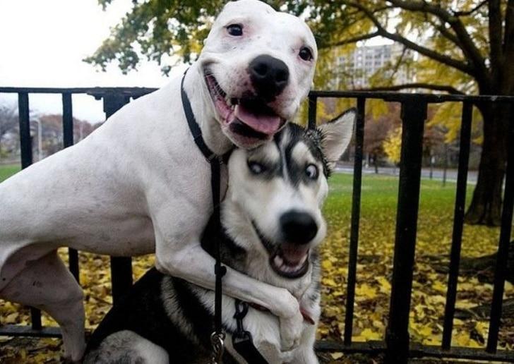 boldog és vicces kutyás fotók