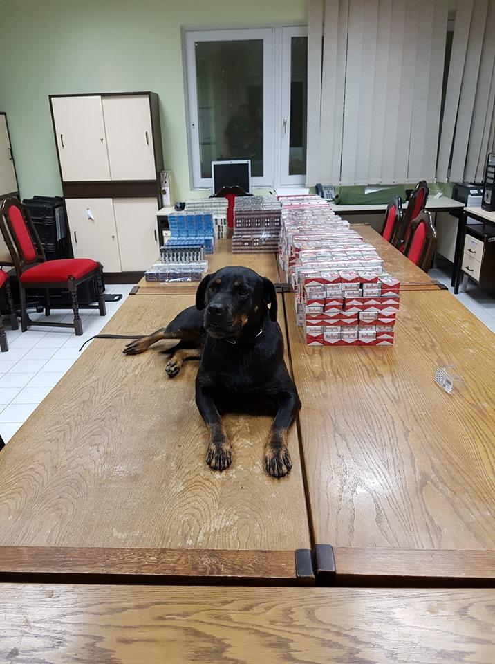 boo a drogkereső kutya