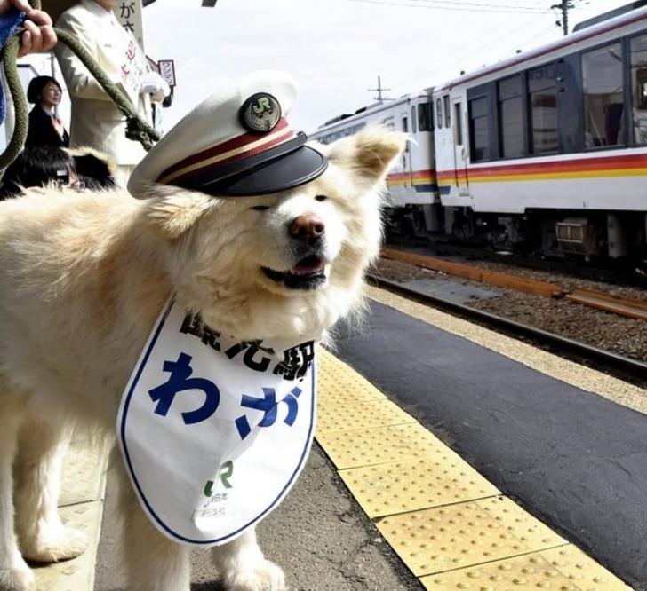 ezek a kutyák jobb hellyé tették a világot