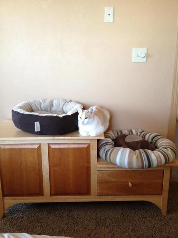 felesleges macskáknak ajándékot venni