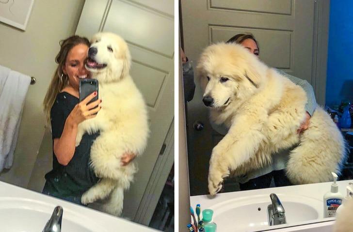 gazdik, akiknek nagyra nőtt a kutyája