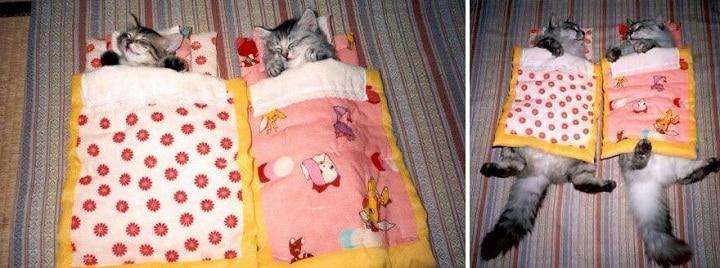 képek macskákról