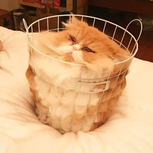 mókás macskák