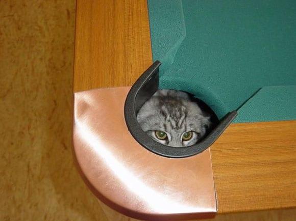 megdönthetetlen bizonyíték, hogy a macskák tényleg nindzsák