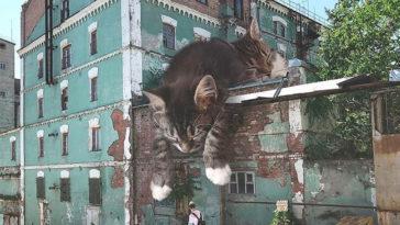 milyen lenne a világ, ha a macskák sokkal nagyobbak lennének