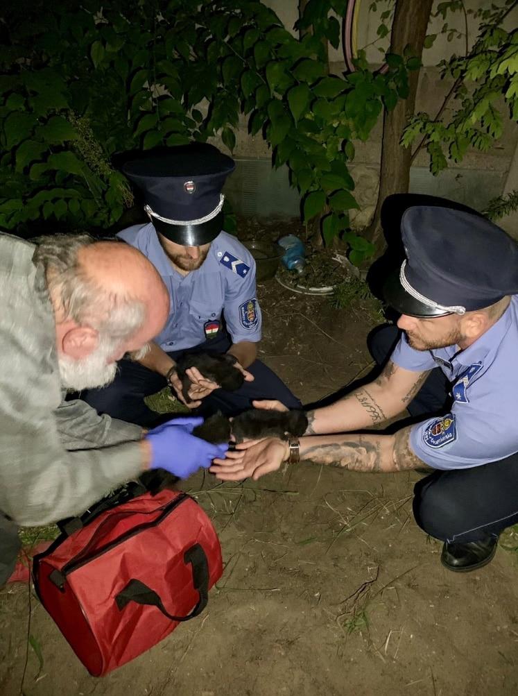 rendőrök mentettek meg három kismacskát