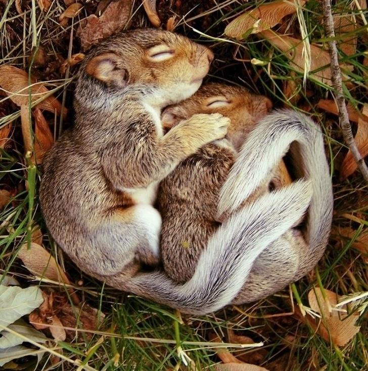 romantikus családi fotók az állatvilágból