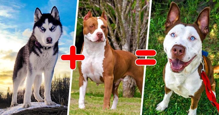 szokatlan keverék kutyák