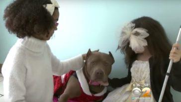 vak kislányok és a pitbull barátsága